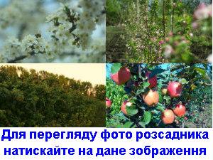 foto-rozs-0